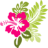 Pink-hibiscus-md.png
